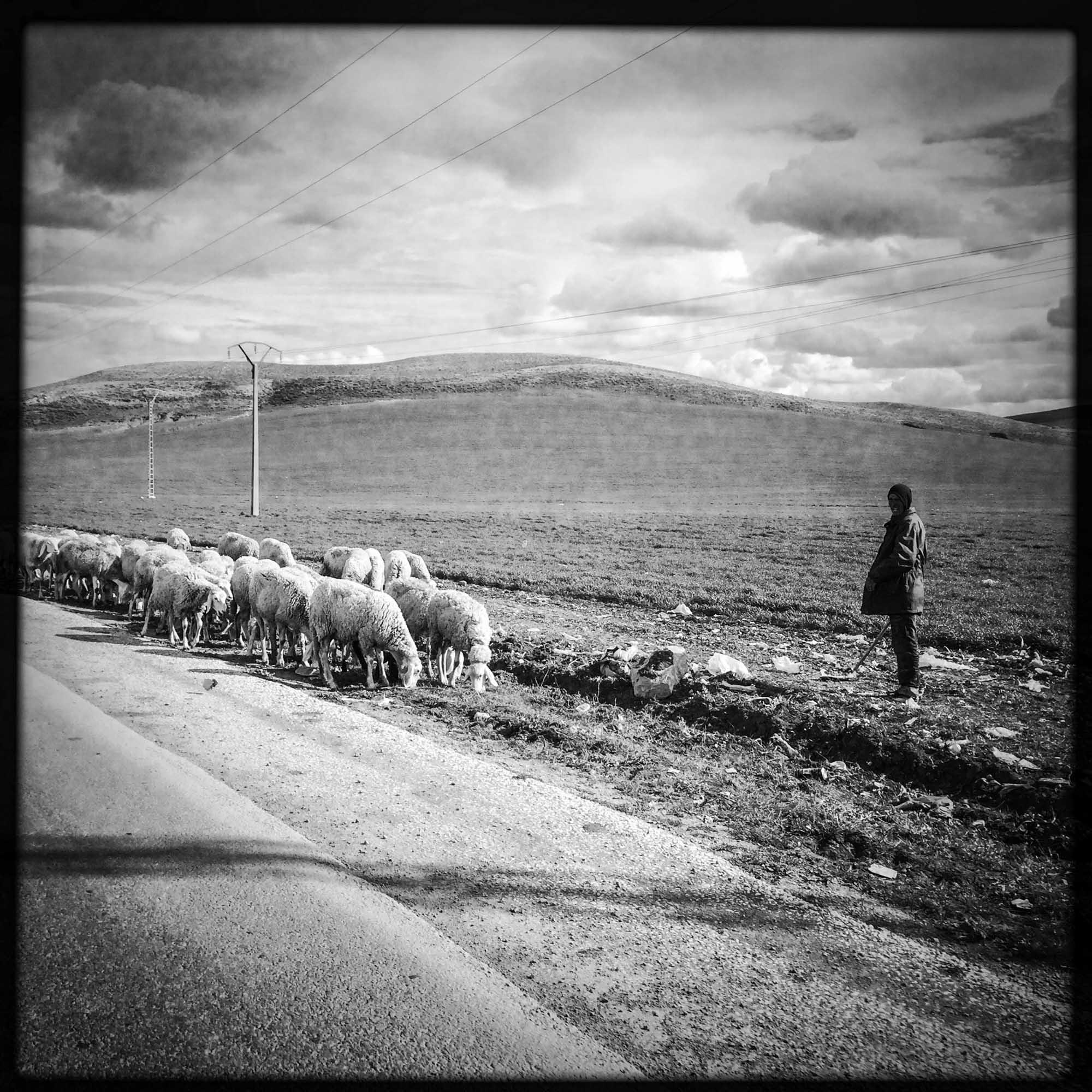 Un berger le long de la route, près de Guelma. 13/02/2016-ALGERIE.
