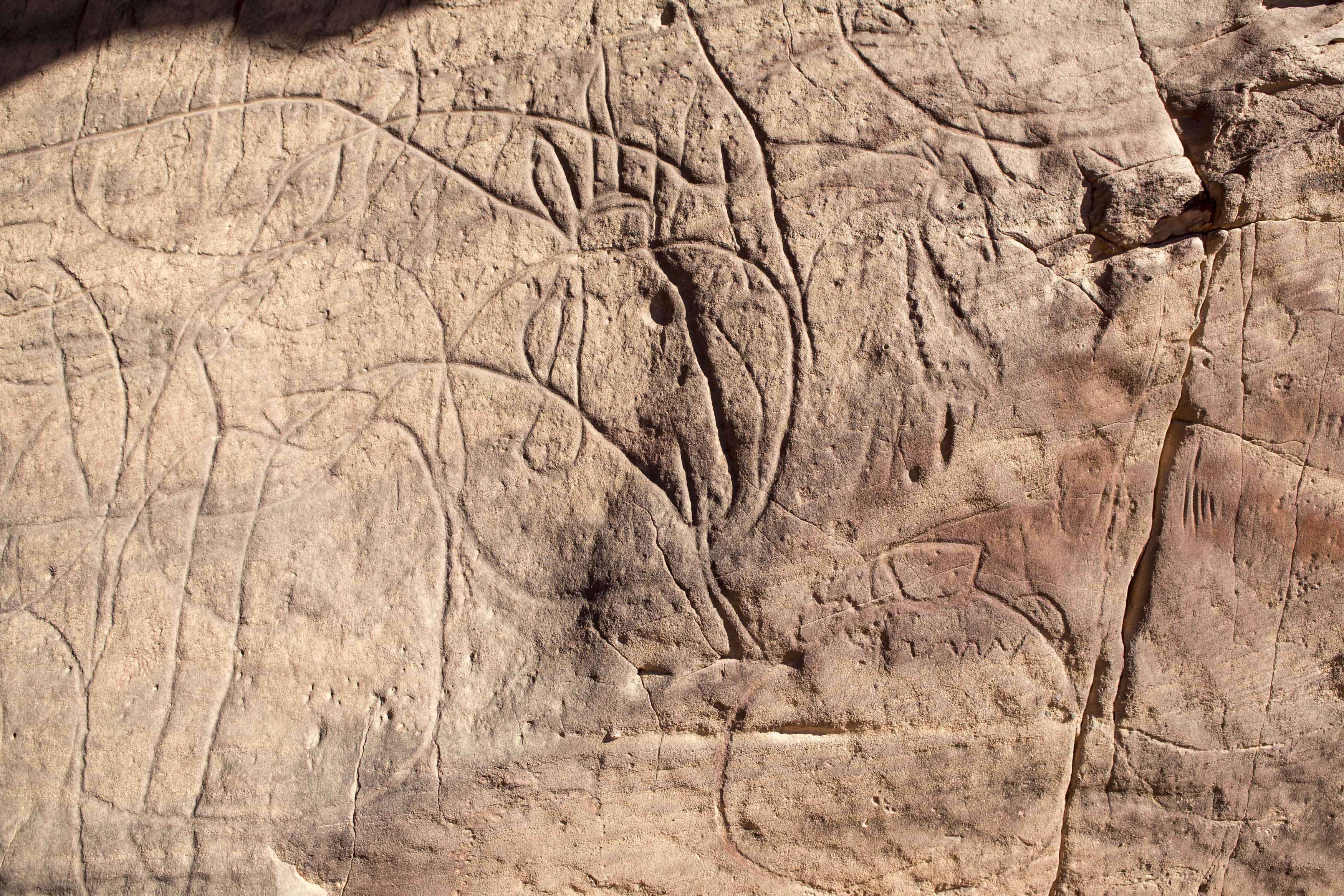 Cave engraving depicting a cow and several other animals on a wall in the Tadrart.The Tadrart (200 km southeast of Djanet) is located in the south of the Tassili N'Ajjer National Park and is part of one of the most beautiful desert in the world but above all the central Sahara.From huge canyons to cliffs carved with rocky peaks of various shapes mix with dunes of colored sand with yellow and red reflections. The Tadrart, Algeria-February 6, 2017.Gravure rupestre représentant une vache et plusieurs autres animaux sur une paroi dans la Tadrart. La Tadrart (200 km au sud-est de Djanet) se situe dans le sud du Parc National du Tassili N'Ajjer et il fait partie d'un des plus beau désert au monde mais avant tout du Sahara central. D'immenses canyons aux falaises sculptées avec de pitons rocheux aux formes les plus diverses  se mélangent avec des dunes de sable coloré aux reflets jaune et rouge. La Tadrart, Algérie-6 février 2017.